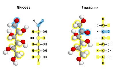 Composición Química De Los Cereales Carbohidratos