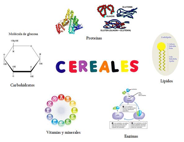 Composición Química De Los Cereales